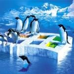 مایکروسافت از لینوکس میترسد کاهش کاربران ویندوز و افزایش کاربران لینوکس در دنیا